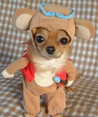 dog-costume