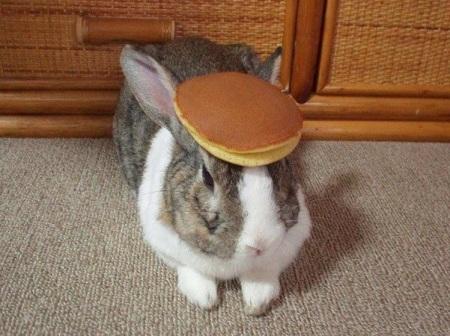 t_pancake_bunny