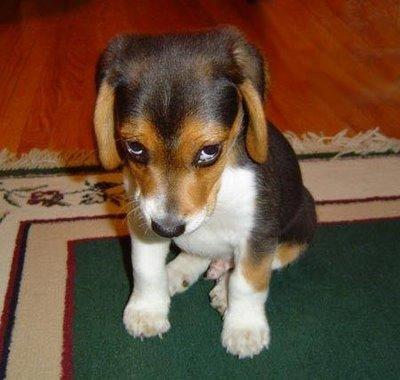 sad-puppy