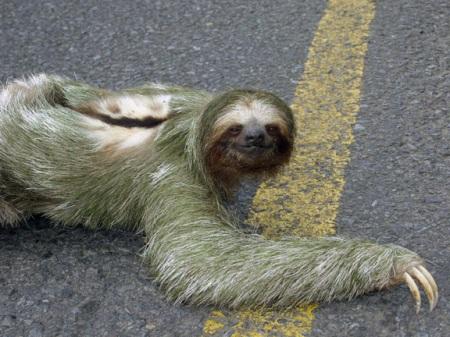 sloth20052small