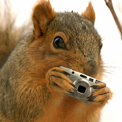 squirrel-shoot-with-camera