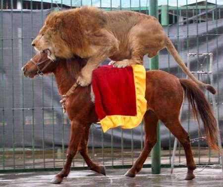 LionRidingHorse